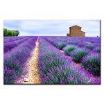 Πίνακας Lavender fields