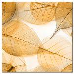 Πίνακας Macro leaves