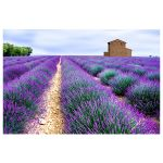 Αφίσα Lavender fields